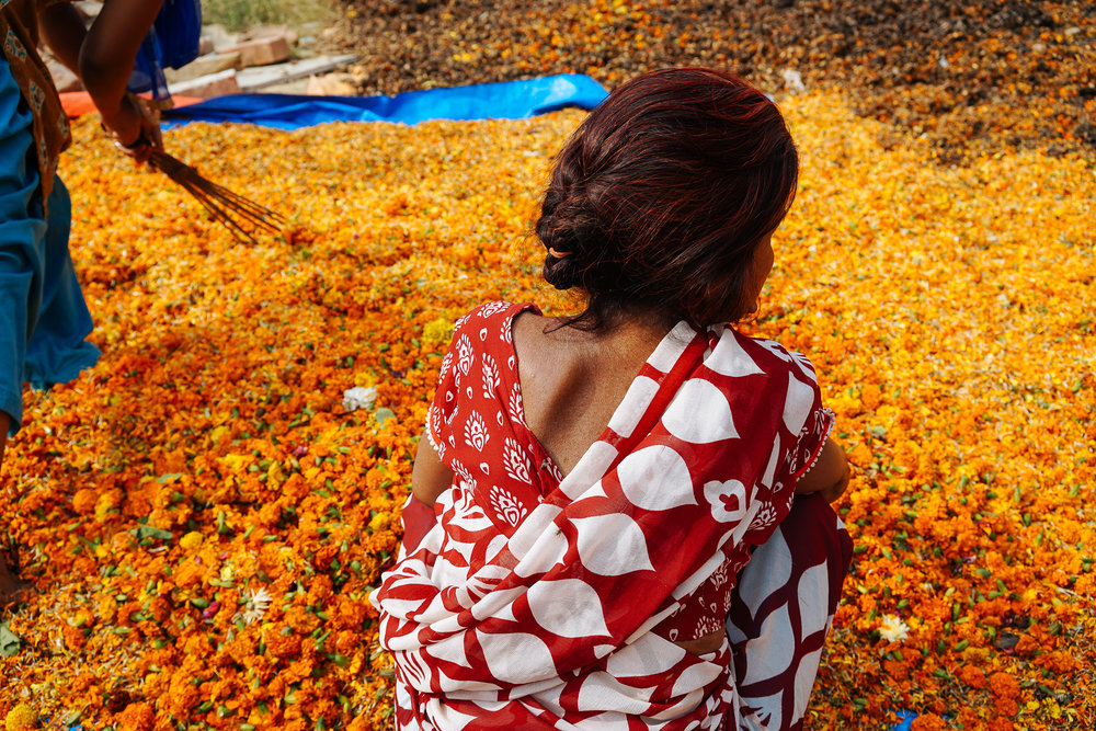 Sumitra sits in front of a large pile of orange marigolds, ensuring there is no debris such as plastic or string.