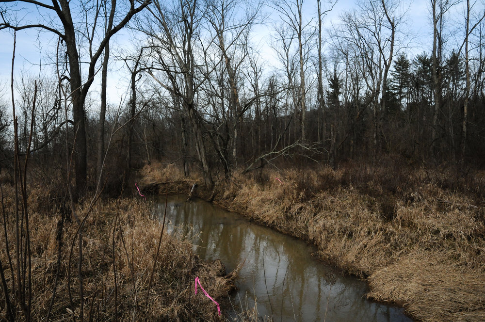 Many people report water contamination - steams that were once clear now glean with oil slicks.