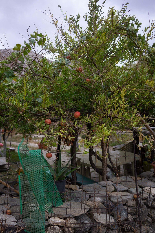 Syros greece sept -414.jpg