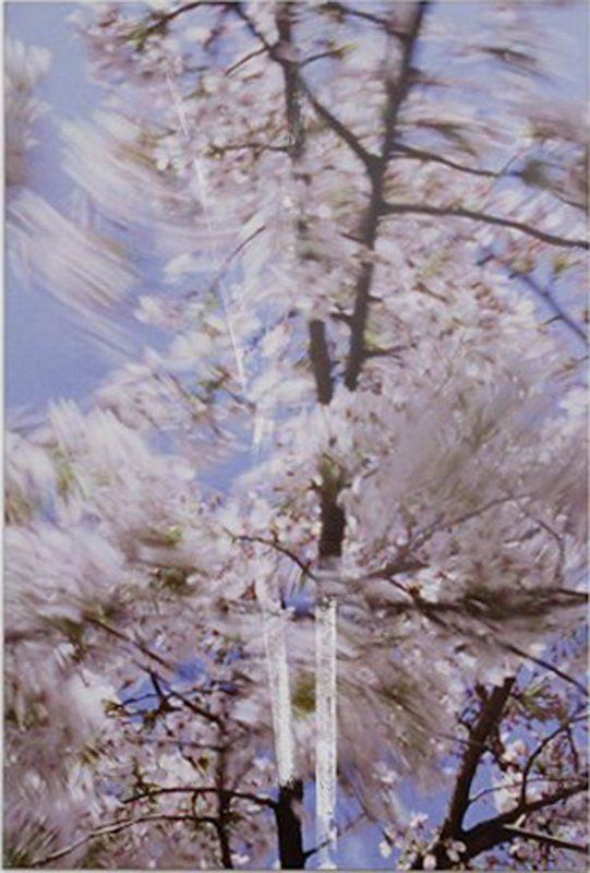 Marijke Van Warmerdam, Blossom - Twins, 2009 via artspace.