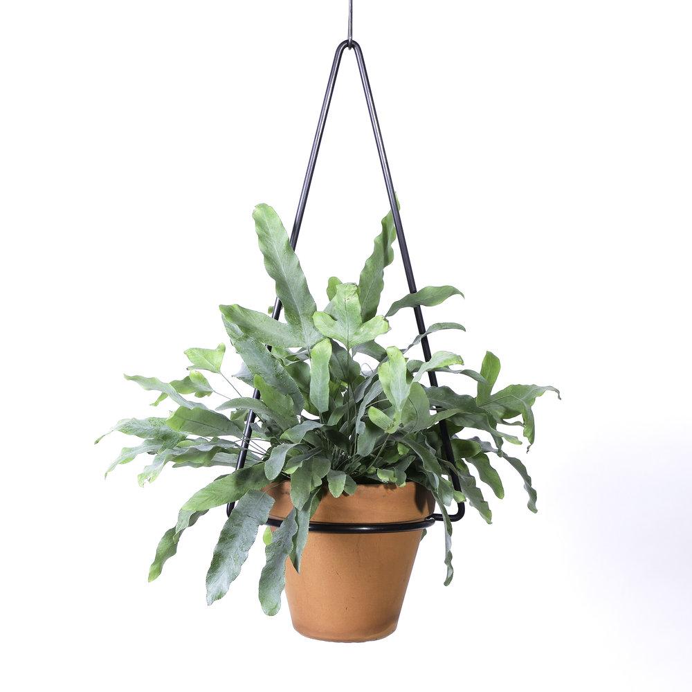 Hanging Planter -