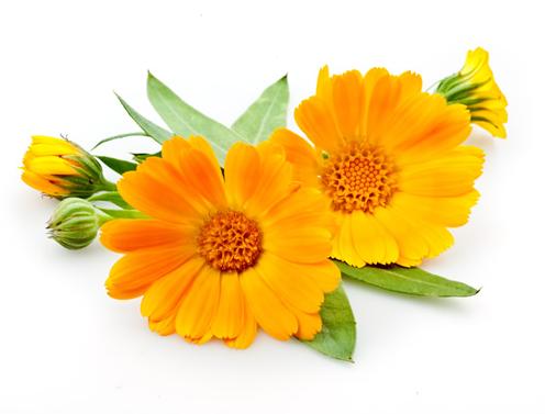 Calendula Hydrosol and dried flowers (USDA certified organic)