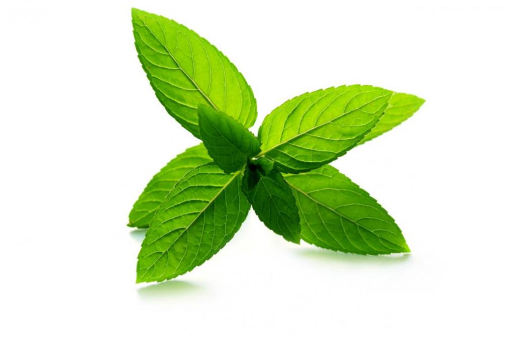 Peppermint Supreme Essential Oil (USDA certified organic)