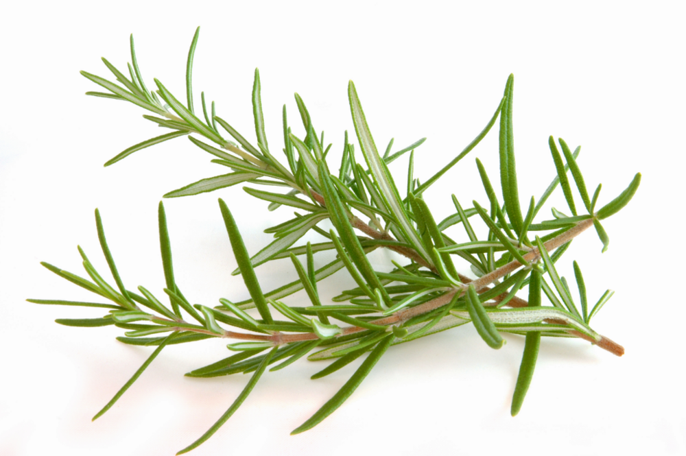 Rosemary Essential Oil and Ground Rosemary (USDA certified organic)