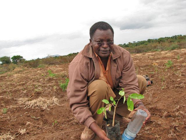 Sebastian planting Mpingo.jpg