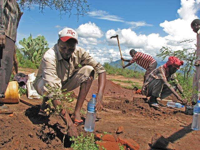 workers planting mpingo.jpg