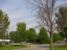 Tree Squad gets rid of Emerald Ash Borer