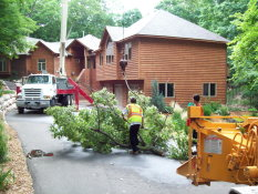 Tree Squad removes tress in the Twin Cities