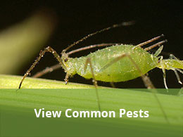 view common pests