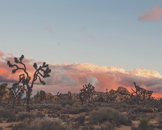 Joshua Tree Sunset No.2