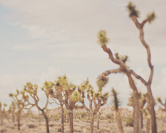 last night i dreamt of the desert no.3