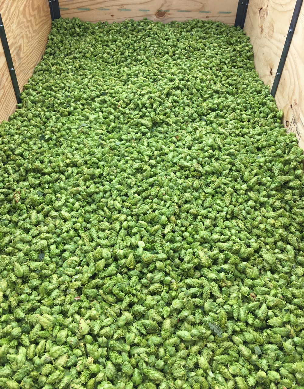 Chinook2016Harvest.jpg