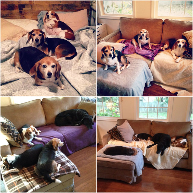 lazy-dogs.jpg