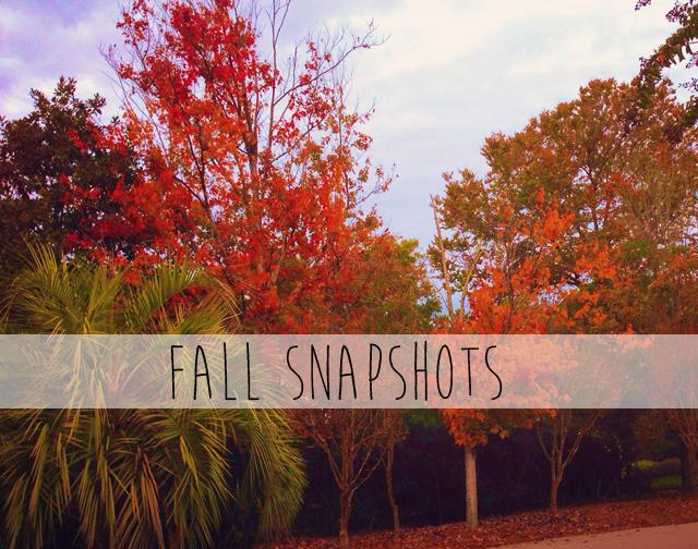 fall-snapshots.png