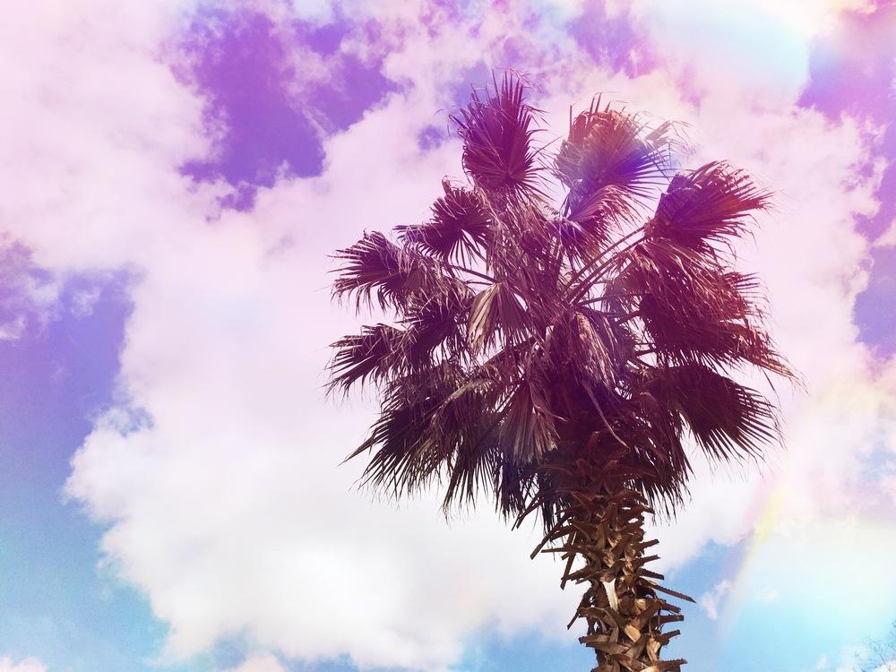 palm-tree-charleston