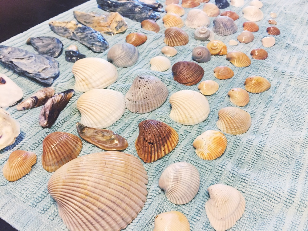 She Sells seashells (or at least she will someday)