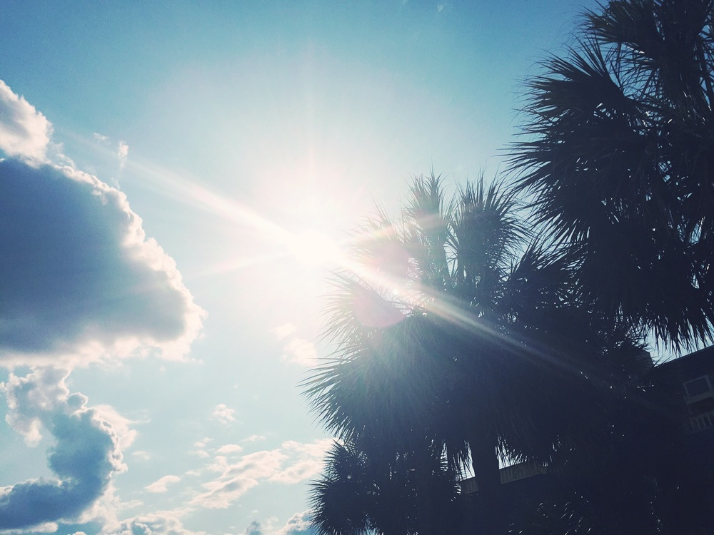palms-and-sun