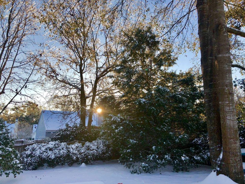 Our snowy backyard