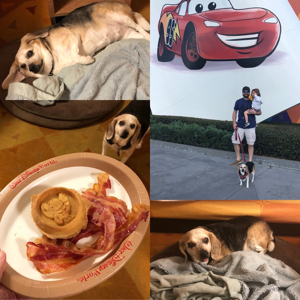 I was so happy to have Meadow Beagle with us on vacation