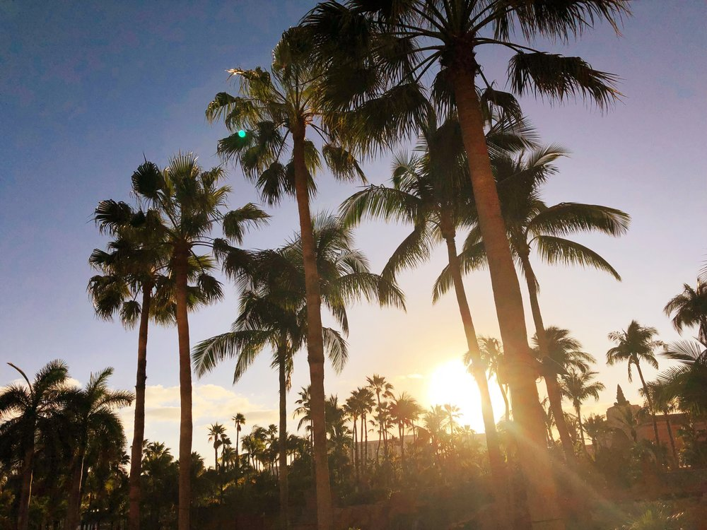 Sunset over the palm trees