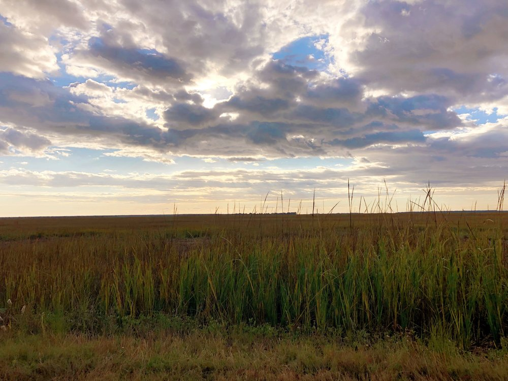 Charleston Saltwater Views