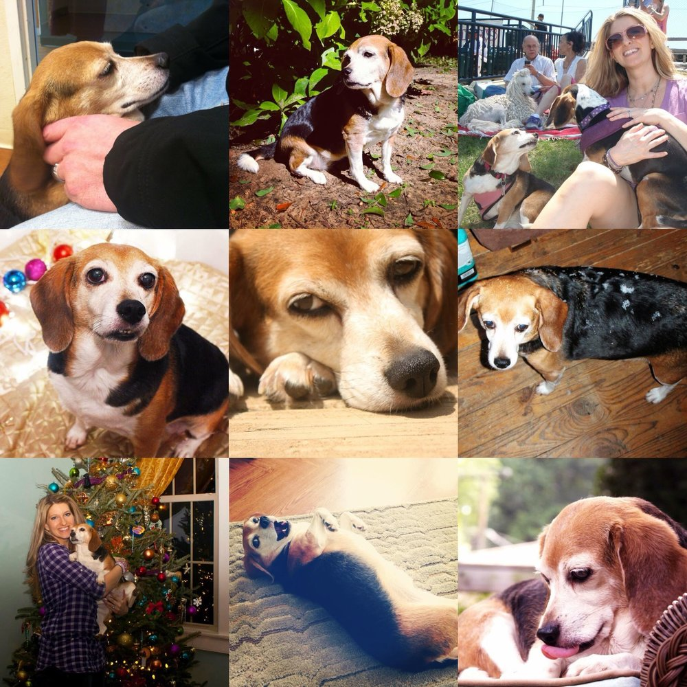 meadow beagle photo collage