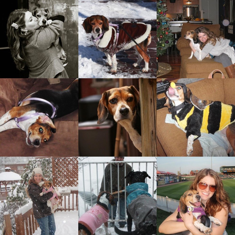 Lucy Belle Beagle photo collage
