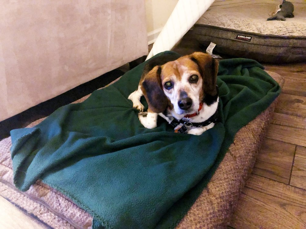 Willow Rose Beagle