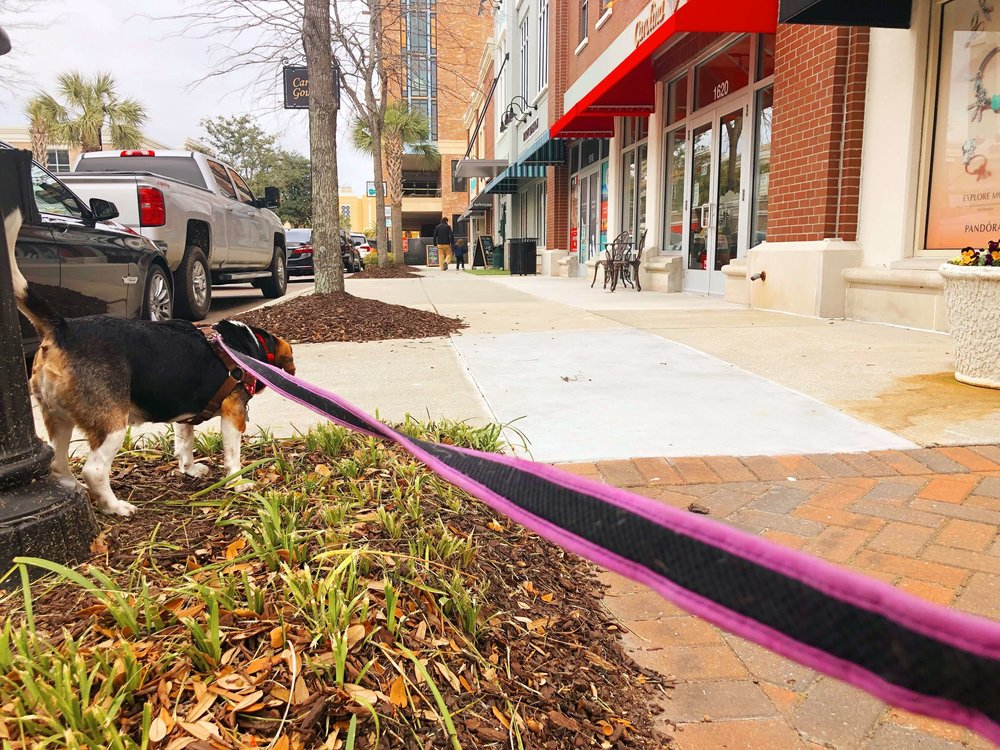 Willow catching all of the scents at the Towne Centre