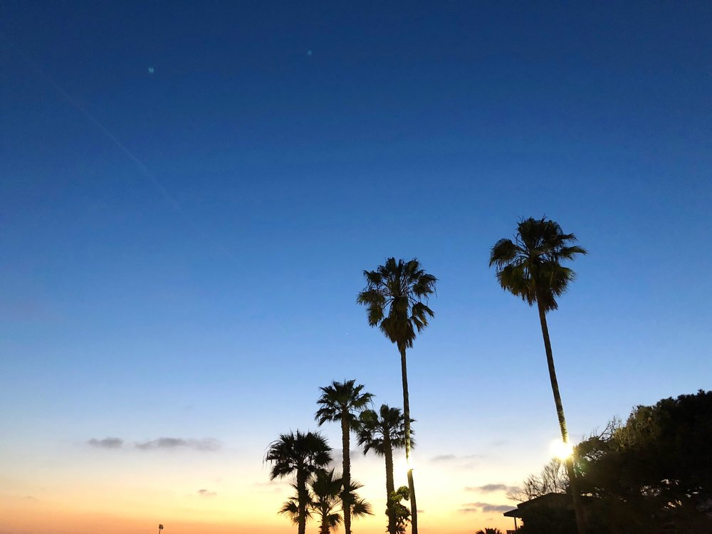 palm trees at sunset in california
