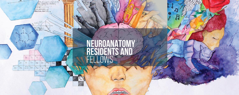 9th Annual Brain Anatomy Fellows Course — Seattle Science Foundation