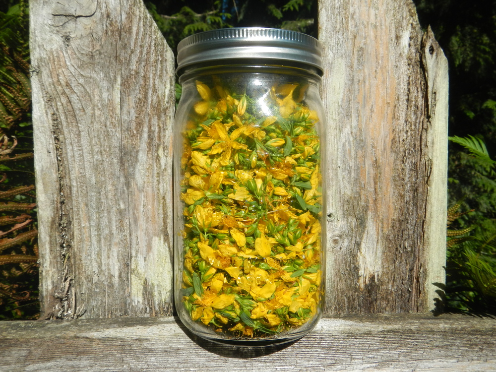 Mason jar filled with hypericum Flowers and Leaves