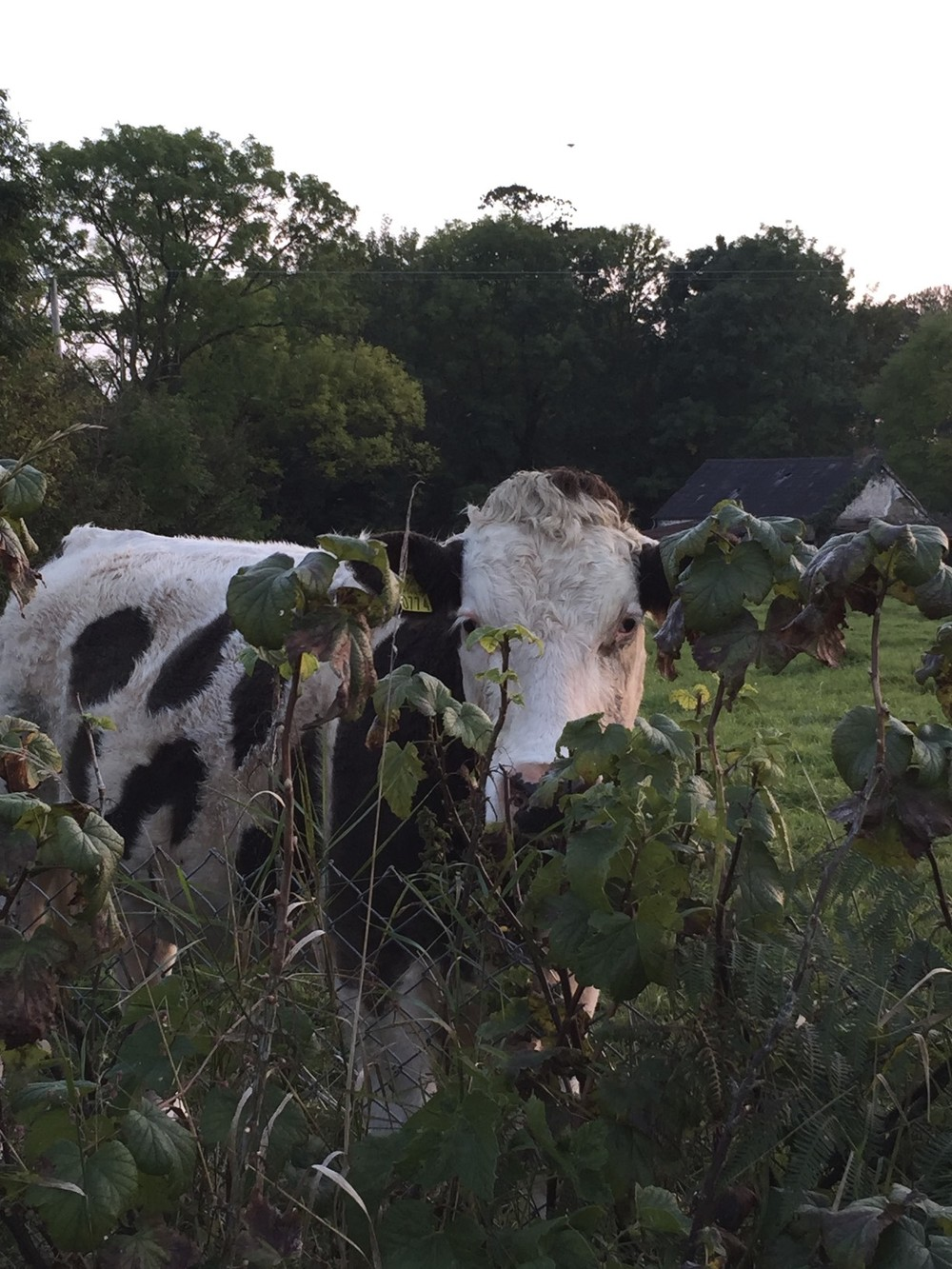 One of the locals at Park South Bed and Breakfast Inn, Mallow, Cork