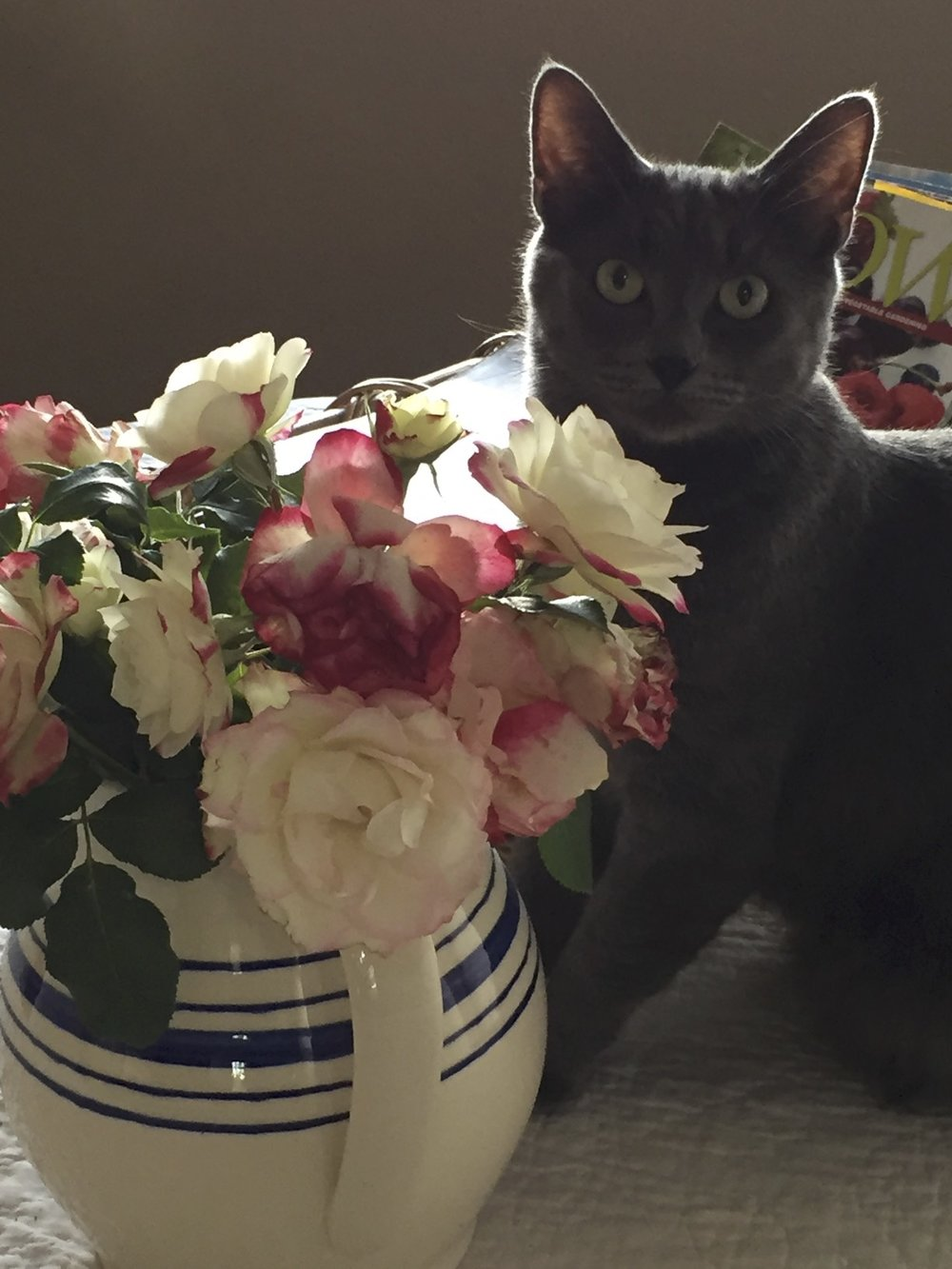 Gandalf chooses to pace his busy day of grooming, eating, and sleeping by stopping to smell the roses.