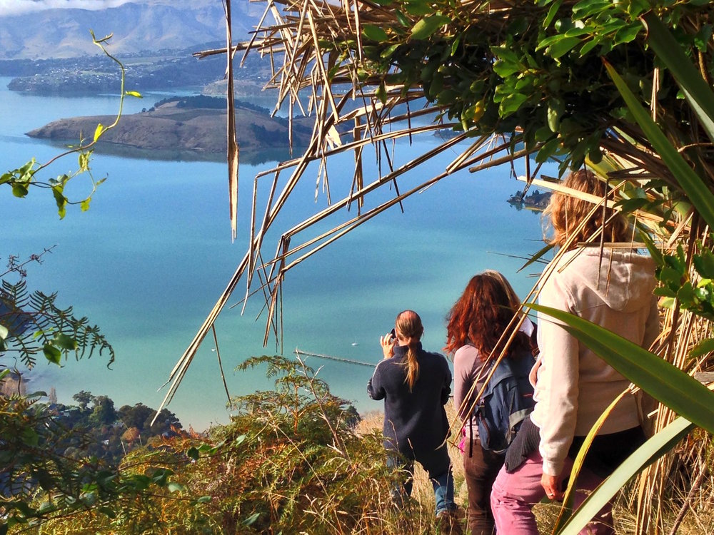 The Crater Rim Walkway offers stunning views of the bay.