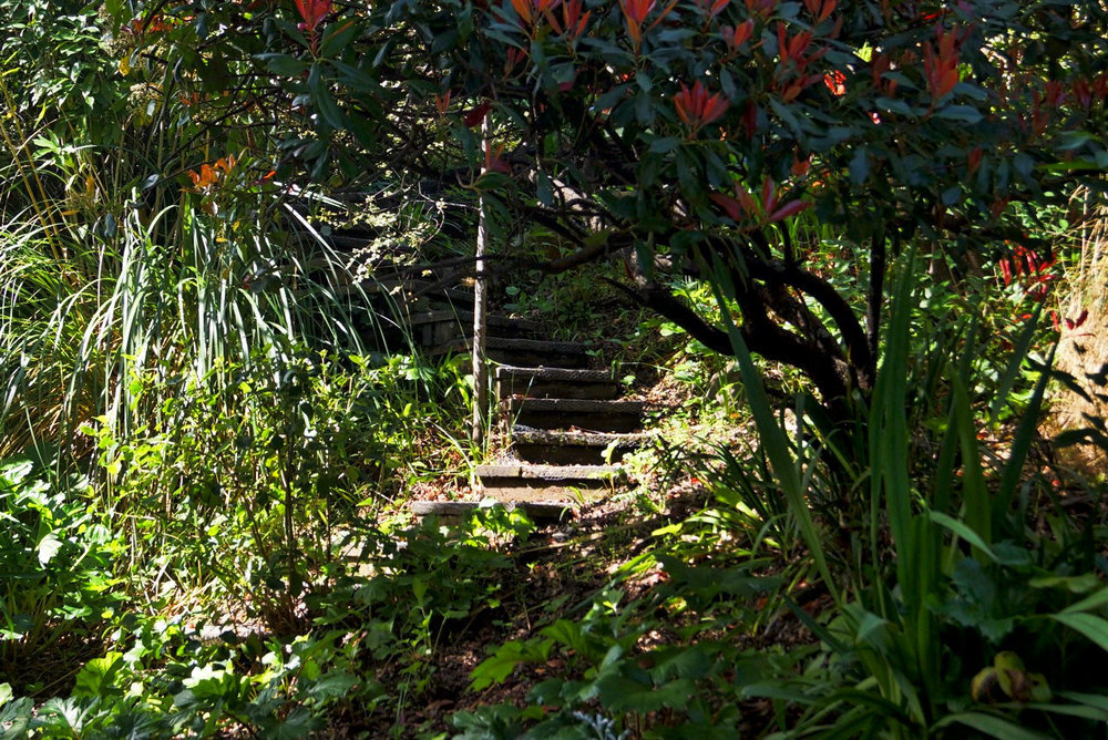 steps thru trees.jpeg