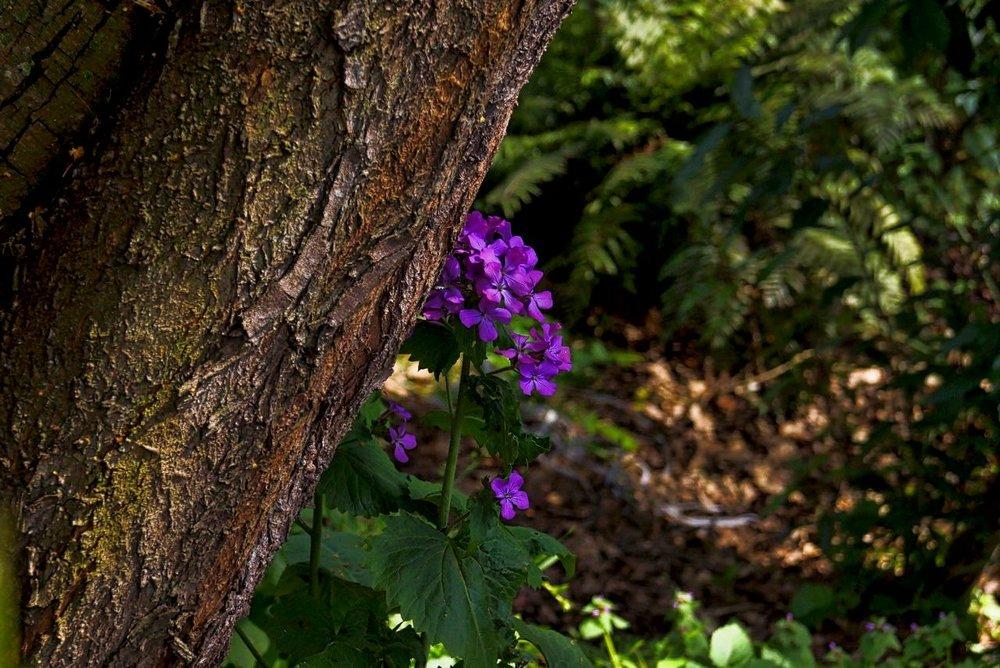 Purple Flowers.jpeg