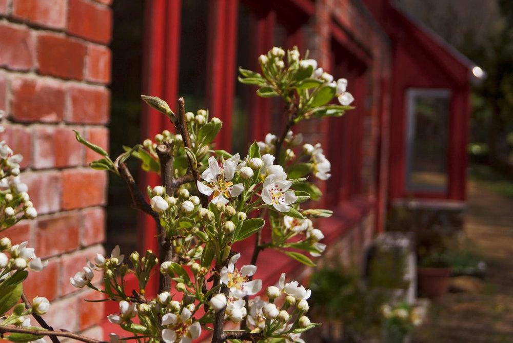 hall behind blossums.jpeg