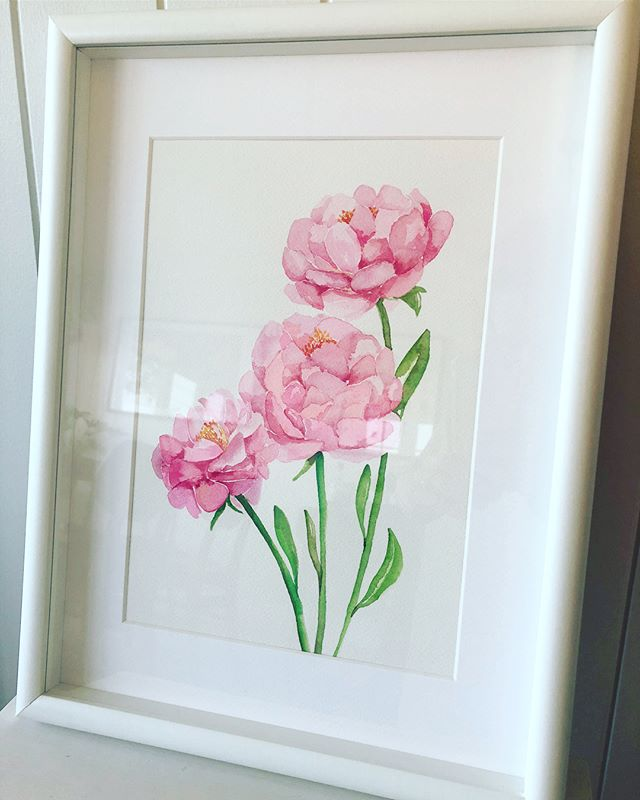 WATERCOLOUR COMMISSION // Three pink peonies all framed and ready for their new home.