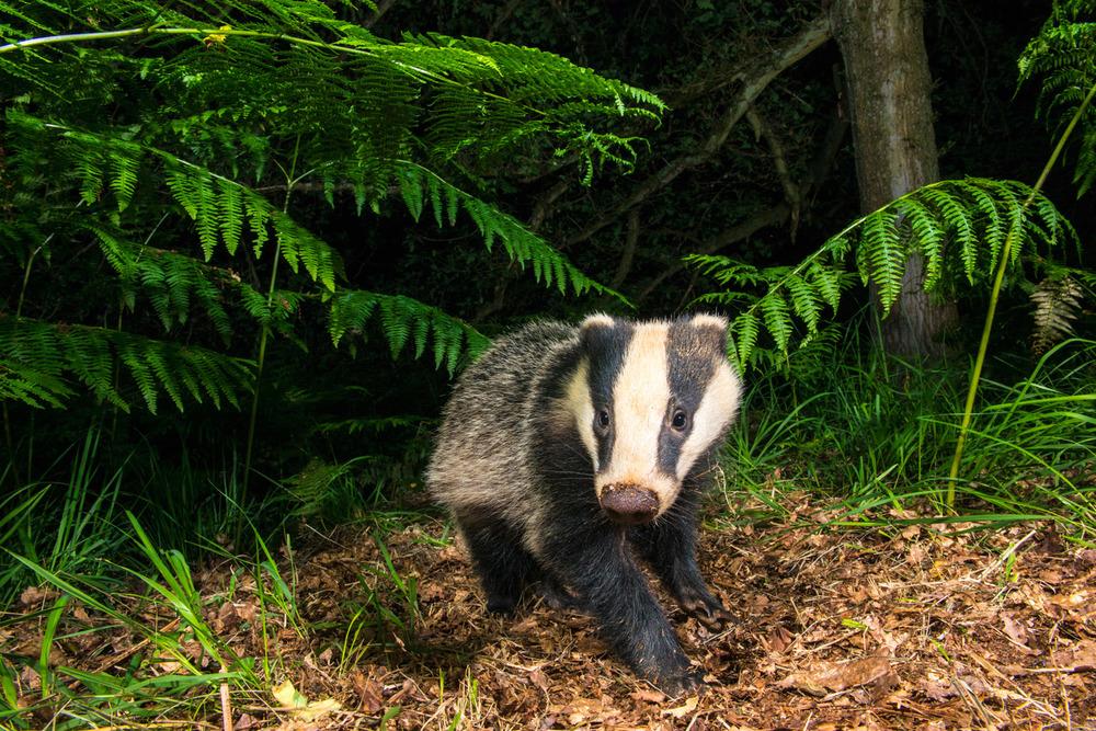 James Warwick Wildlife Photography