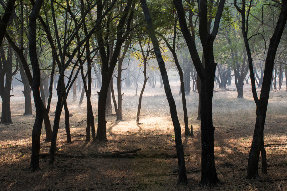 Enchanted dhok forest, Ranthambhore National Park, Rajasthan, India