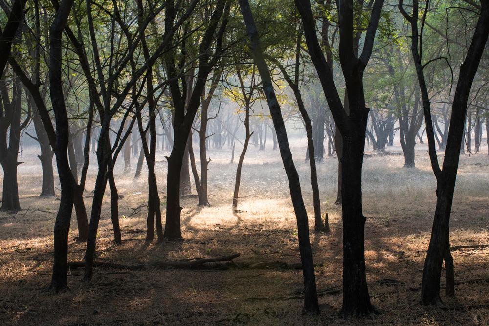 Enchanted dhok forest, Ranthambhore National Park, Rajasthan, India