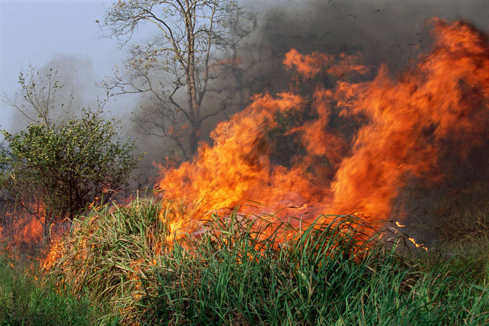Managed burning of savannah woodland Kaziranga National Park, Assam, India