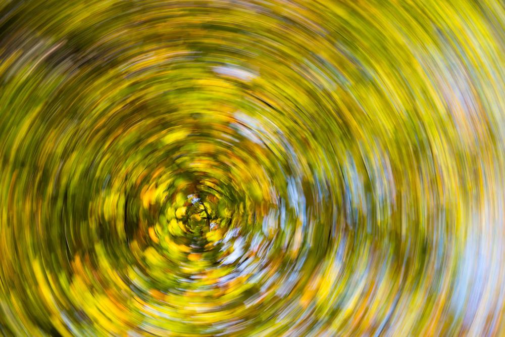 Autumnal beech trees 'spinning', Ashdown Forest, Sussex Weald, England