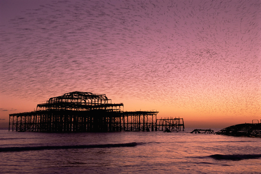 Starling flock above derelict West Pier at twilight, Brighton, Sussex, England