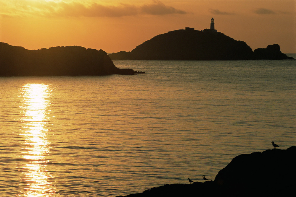 Round Island lighthouse with herring gull and oystercatchers silhouetted at sunset, St Martin's, Isles of Scilly, England