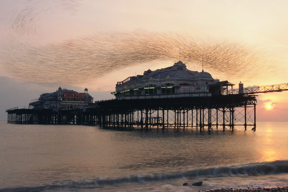 Starling flock above West Pier at sunset, Brighton, Sussex, England