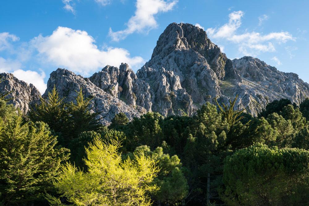 Pine and fir forest and Peñón Grande, Sierra de Grazalema Natural Park, Andalucía, Spain