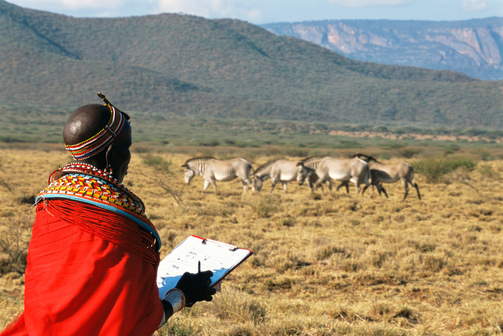 Samburu woman conservation scout monitoring Grévy's zebras, West Gate Conservancy, Samburu, Kenya
