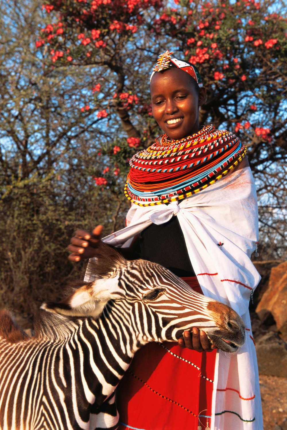 Samburu woman with orphaned Grévy's zebra foal, West Gate Conservancy, Samburu, Kenya